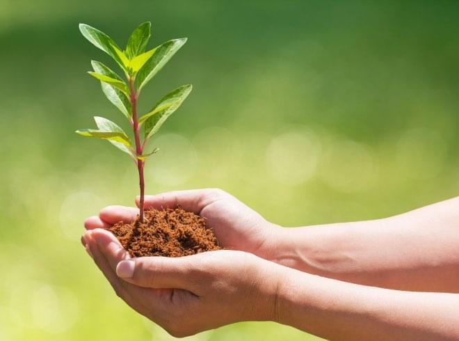 コアの木植樹キャンペーン